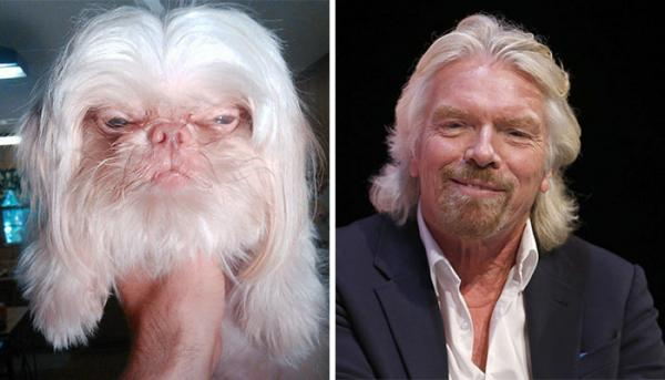 10 собак, которые в точности копируют людей и вещи (ФОТО)