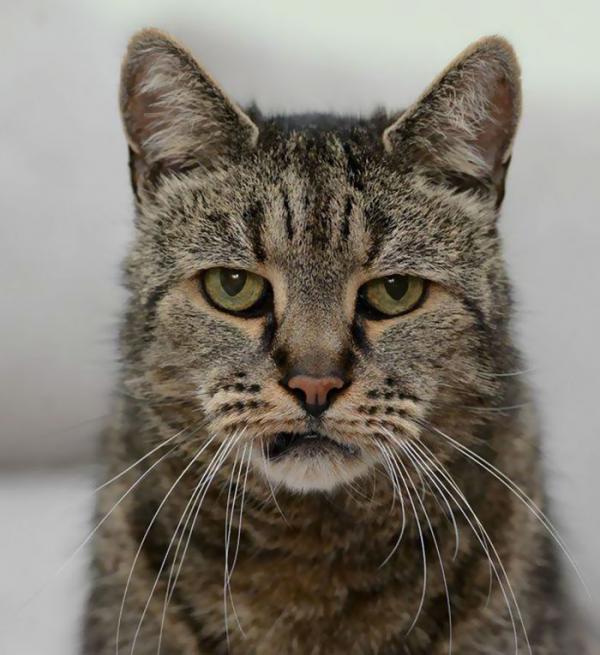 Самому старому в мире коту исполнился 31 год (ФОТО)