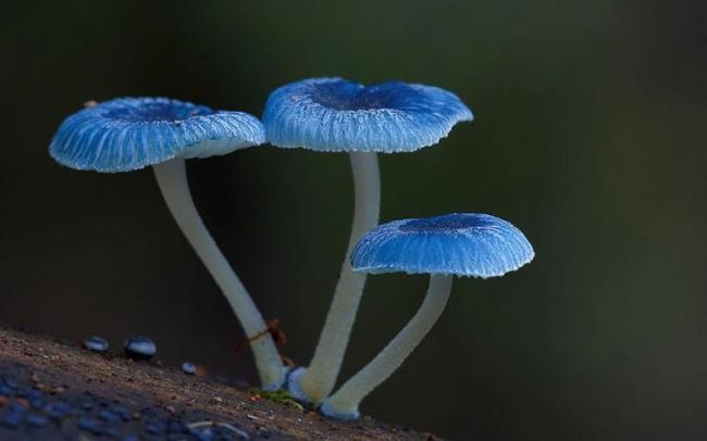 Волшебный мир австралийских грибов (ФОТО)