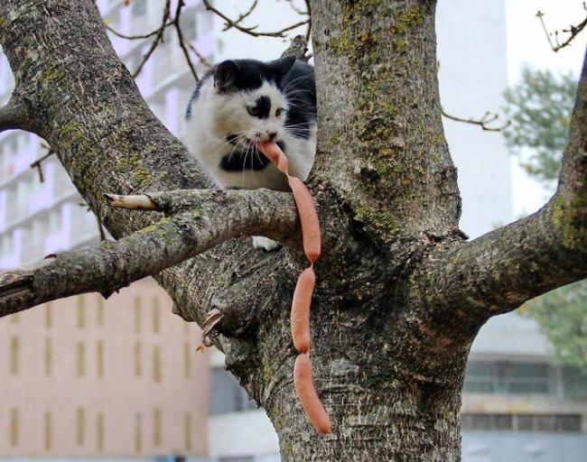 25 котов-разбойников, пойманных с поличным (ФОТО)