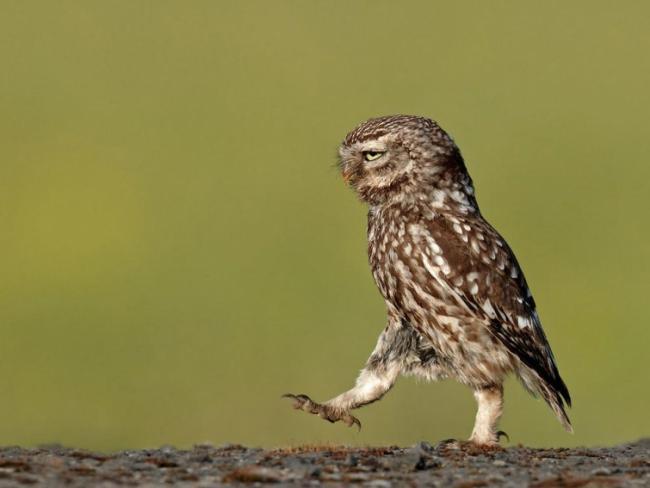 Самые забавные снимки животных (ФОТО)
