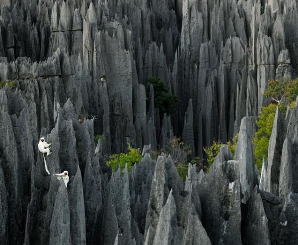 Чудо природы: самый необычный лес в мире (ФОТО)