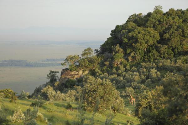 Роскошное место для отдыха в окружении дикой природы: необычный отель в Африке (ФОТО)