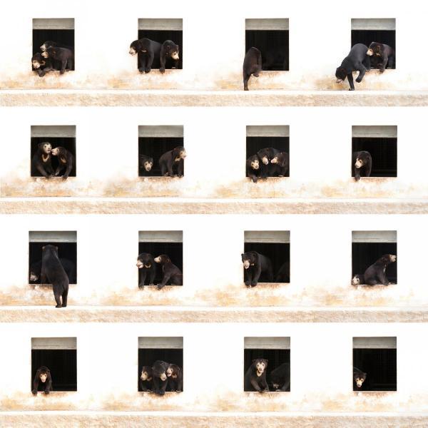 Десять умопомрачительных снимков с крупнейшего фотоконкурса в мире (ФОТО)
