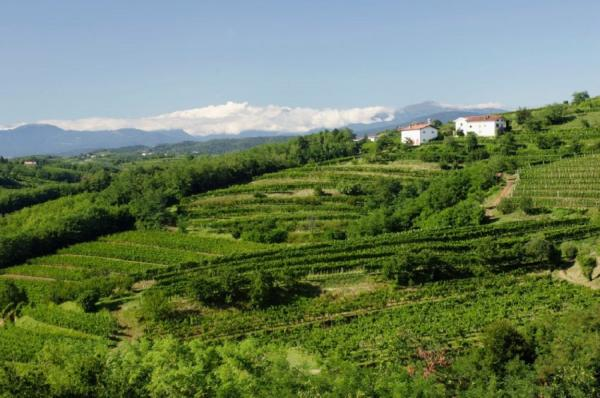 Один из красивейших винодельческих регионов Европы (ФОТО)