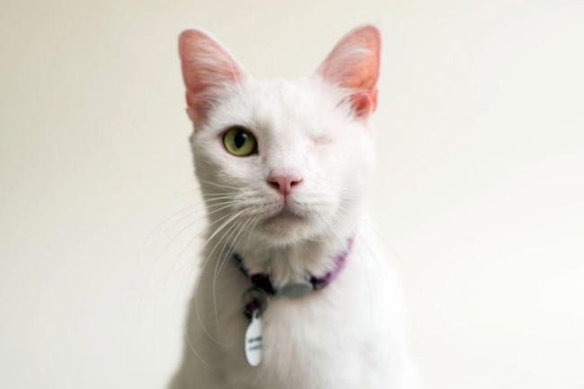 Небезразличный фотограф показал красоту слепых кошек (ФОТО)