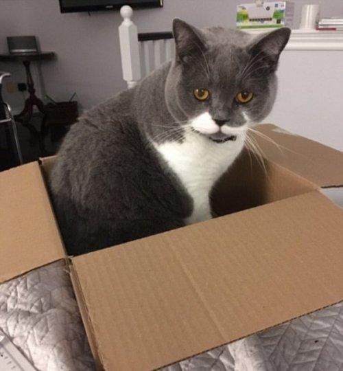 Курьезные снимки из серии «кошки в коробках» (ФОТО)