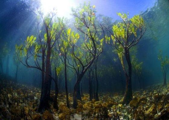 Самые необычные деревья на планете (ФОТО)