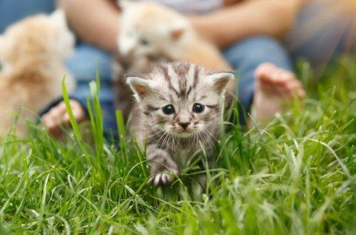 25 очаровательных котят, которые сделают вас счастливыми (ФОТО)