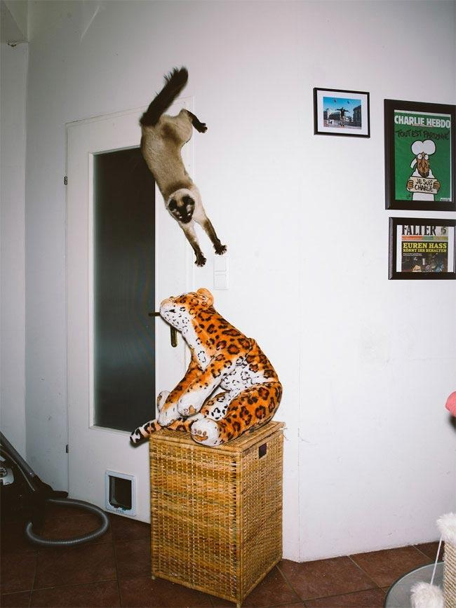 Курьезные снимки летающих котов (ФОТО)