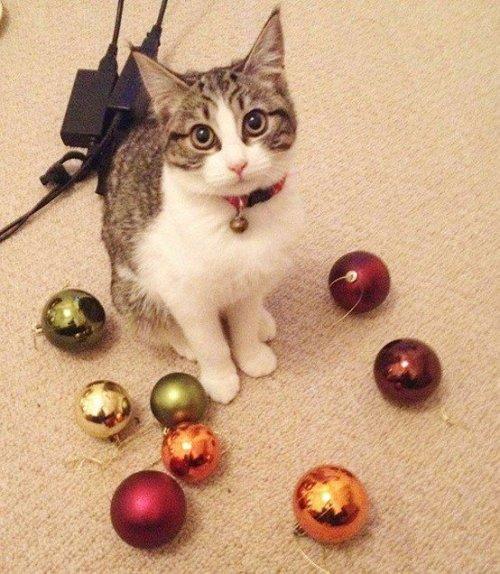 Забавные коллекции вещей, украденных кошками (ФОТО)
