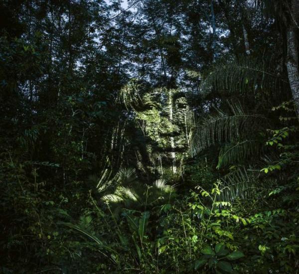 Удивительные «световые граффити» в тропическом лесу (ФОТО)