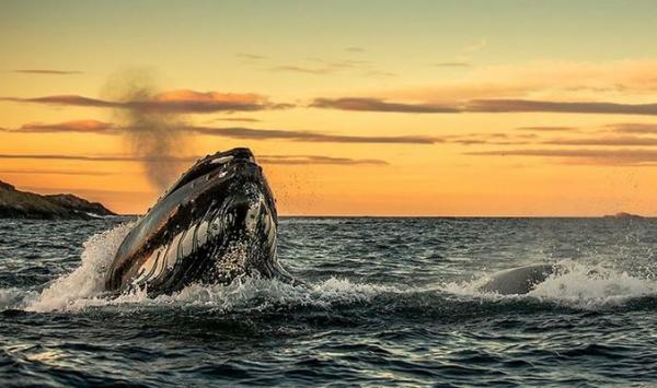 Гренландские киты: уникальные снимки Аудуна Рикардсена (ФОТО)