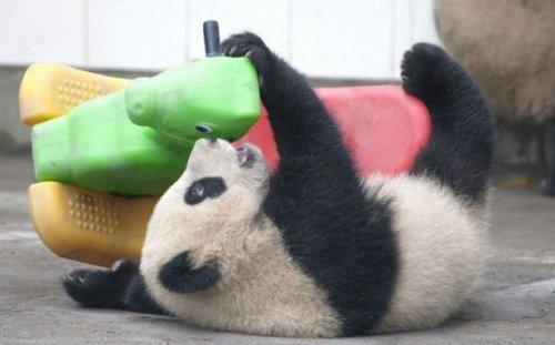 Подборка забавных животных для поднятия настроения (ФОТО)
