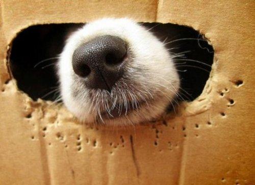 Собаки, которые тоже обожают сидеть в коробках (ФОТО)