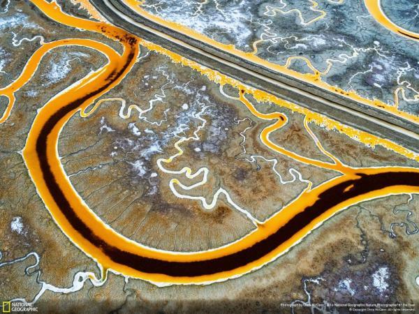 Журнал National Geographic лучшие снимки дикой природы (ФОТО)