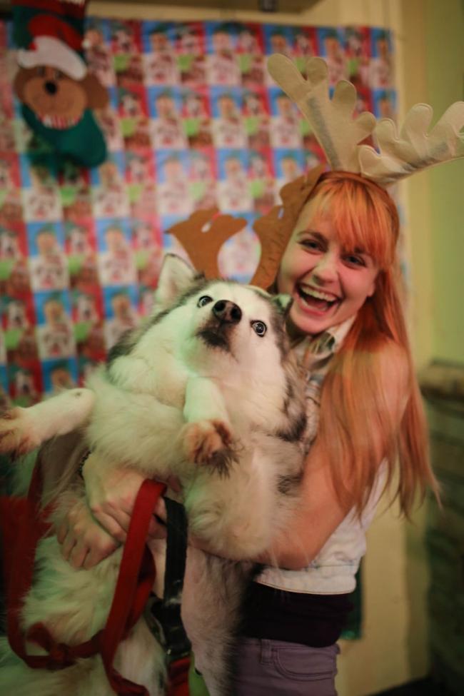 20 домашних животных, которые ненавидят Рождество (ФОТО)