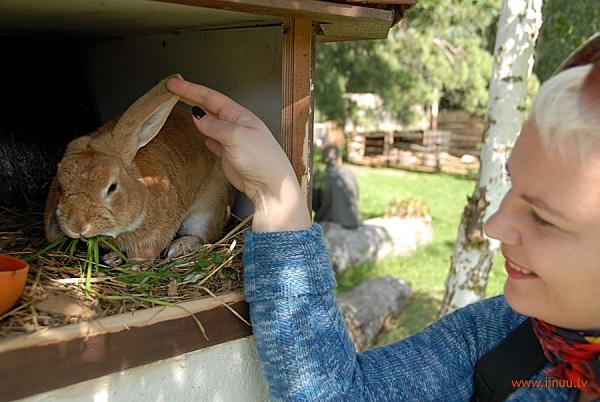 Город кроликов: сказка существует (ФОТО)