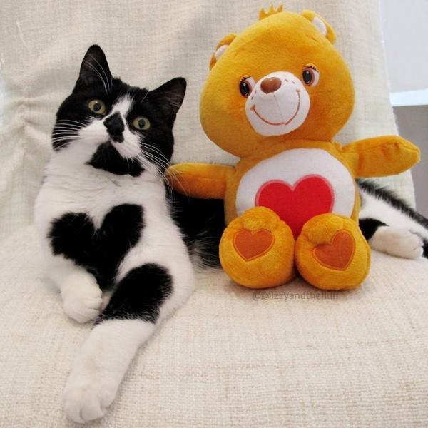 Кошка «с открытым сердцем» стала новой звездой Интернета (ФОТО)