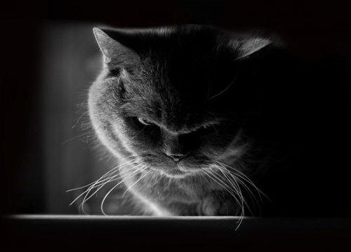 Самые недовольные кошки в мире (ФОТО)