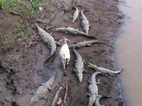 Курьезные снимки животных, которые решительно идут против системы (ФОТО)