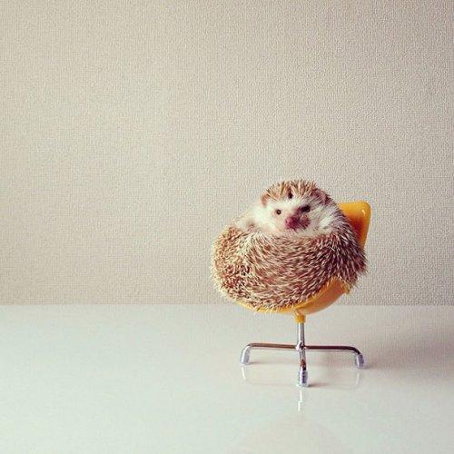Очаровательные снимки ёжиков, которые вызовут вашу улыбку (ФОТО)
