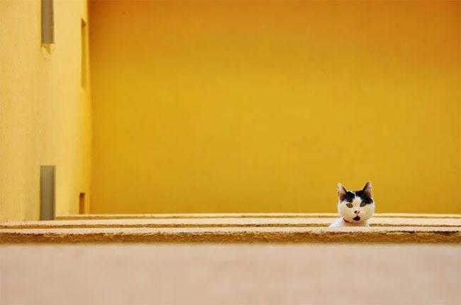 Подборка курьезных снимков домашних животных (ФОТО)