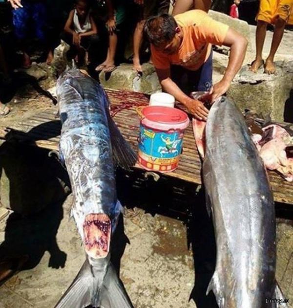 Филиппинские рыбаки выловили самого необычного обитателя глубин (ФОТО)