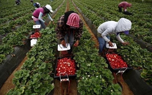 Европа столкнулась с проблемами со сбором урожая из-за пандемии