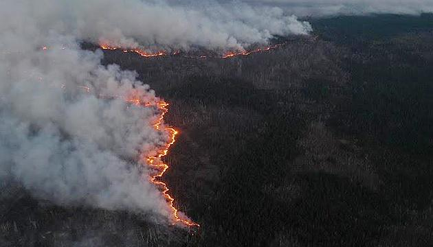Нацгвардия начала антидиверсионную операцию из-за поджогов в лесах