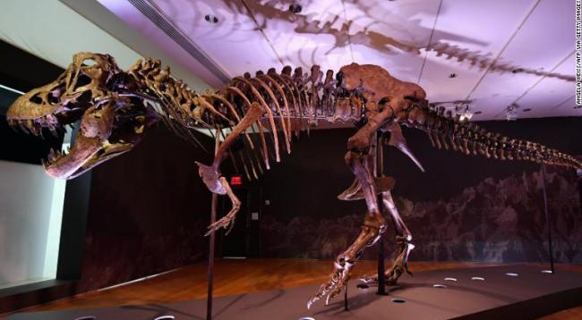 На Christie's продан скелет тираннозавра за рекордные $31,8 миллиона