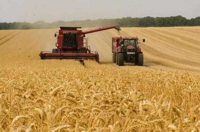 Аграрии предупреждают о рисках обвала рынка зерновых