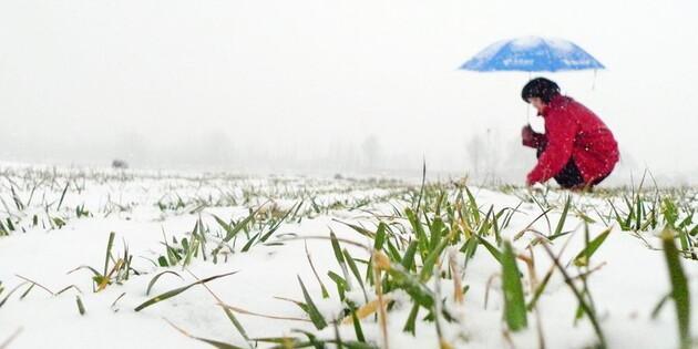 Ученые оценили влияние морозов на будущий урожай