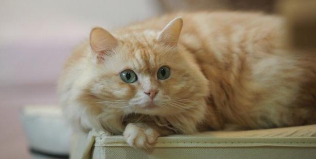 Ученые выяснили, почему кошки мнут лапками