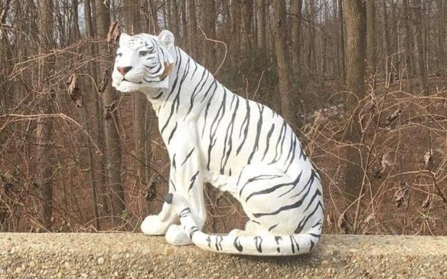 Американец пожаловался в 911 на отдыхающего у дороги белого тигра. Выяснилось, что это просто статуя
