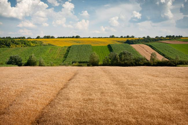 На следующей неделе Рада может завершить земельную реформу в Украине