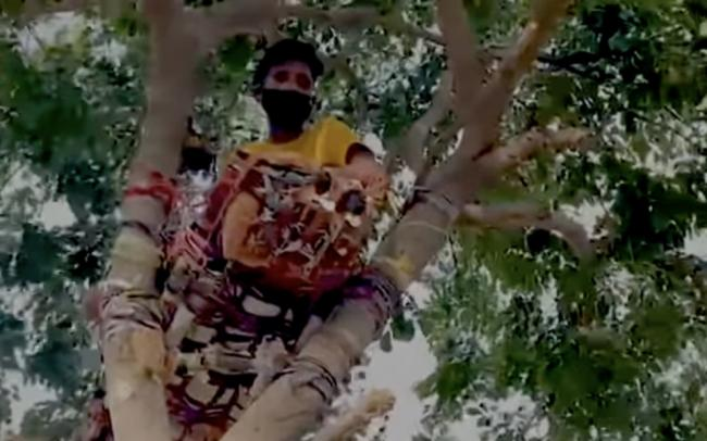 В Индии студент с коронавирусом самоизолировался на дереве на 11 дней