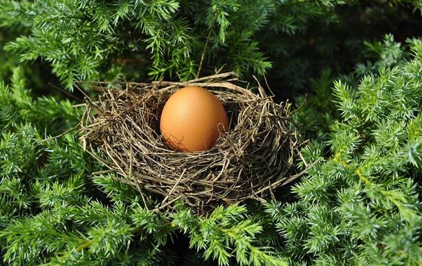 В Израиле обнаружили куриное яйцо возрастом около тысячи лет