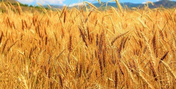 Рада вернула ставку НДС 20% на некоторую сельскохозяйственную продукцию