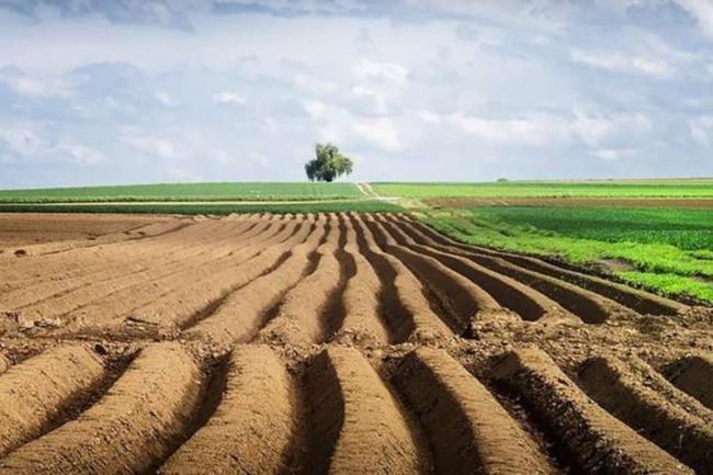 За полтора месяца в Украине заключили более 7 тысяч соглашений на рынке земли