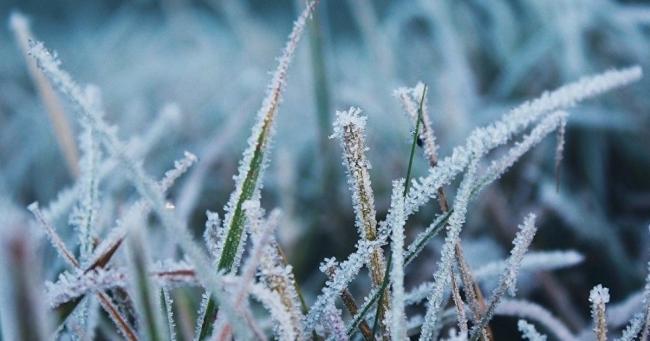 В Украину возвращаются заморозки: синоптики рассказали, где похолодает