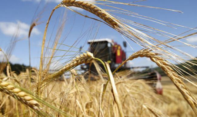 Украина продолжает собирать рекордный урожай – Минагро