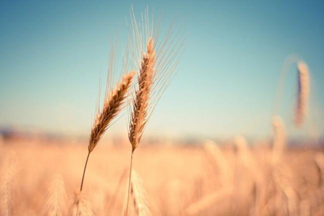 100 дней с запуска рынка земли: самый дорогой гектар продали почти за 40 млн грн